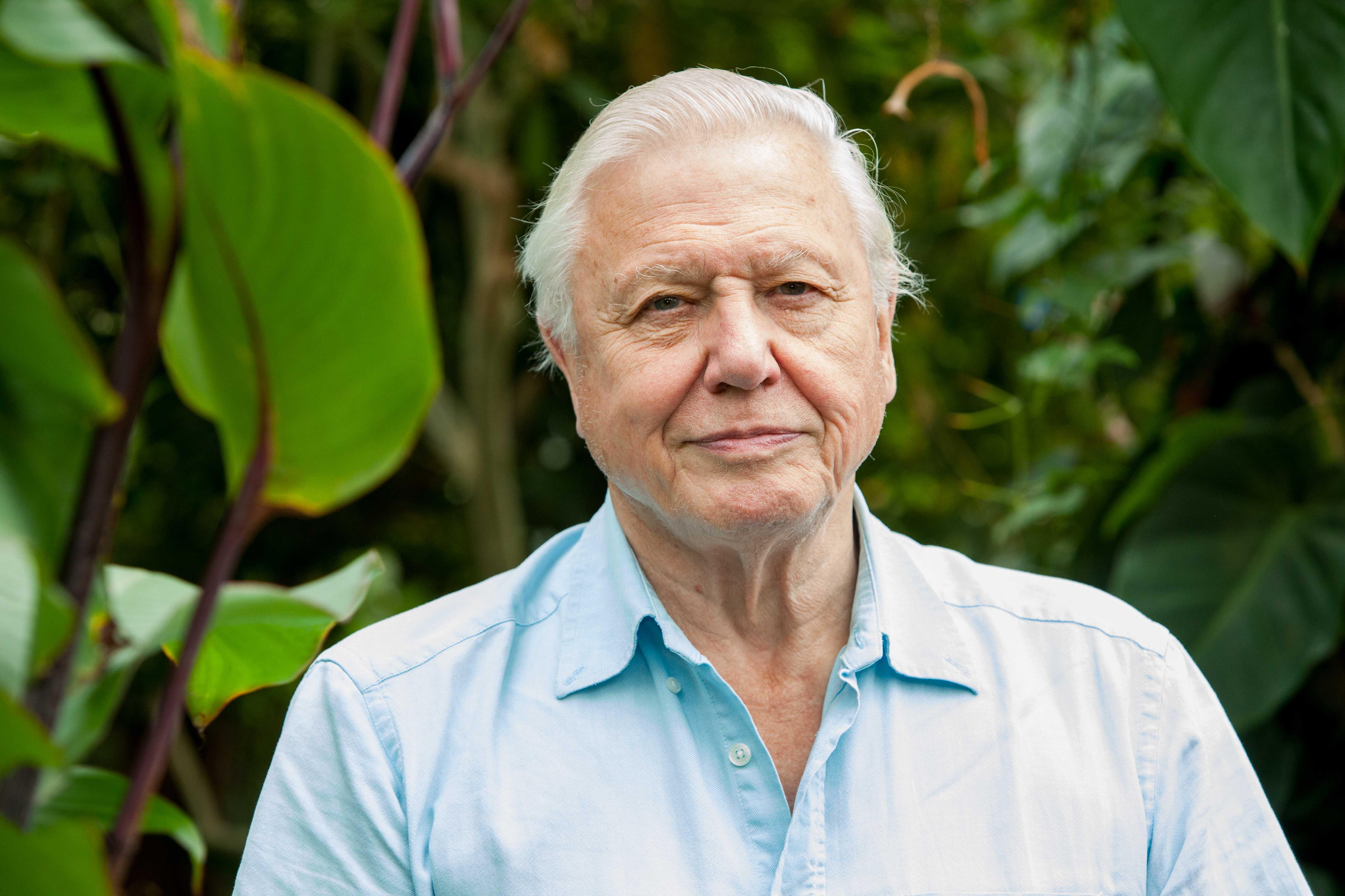 david attenborough - photo #13