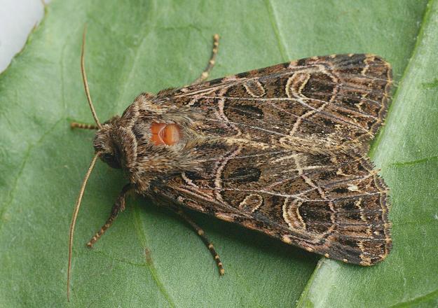 Identify a moth | Butterfly Conservation