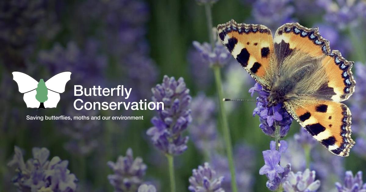 Identify a butterfly | Butterfly Conservation
